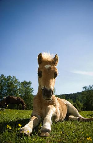 Häst rider för singlar